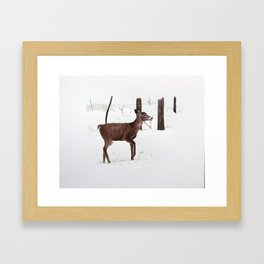 Chevreuil Framed Art Print
