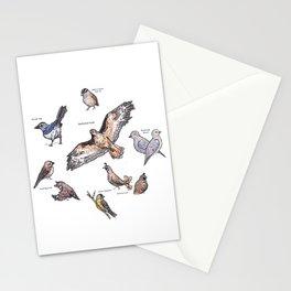 Northern Nevada Backyard Birds Stationery Cards