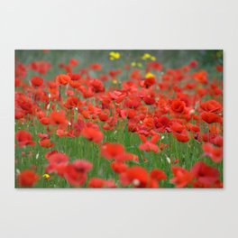 Poppy field 1820 Canvas Print