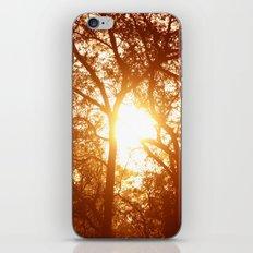 Canopy Sunrise iPhone & iPod Skin