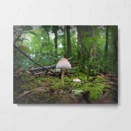 Small Mushroom, Smaller spider Metal Print