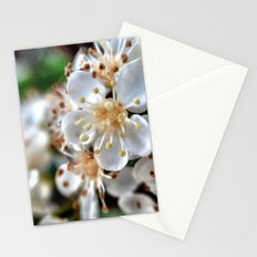 Flowers. Stationery Cards