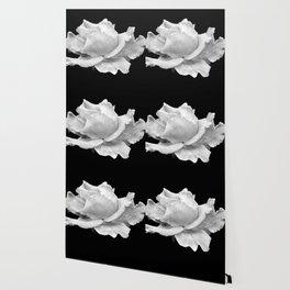 White Rose On Black Wallpaper