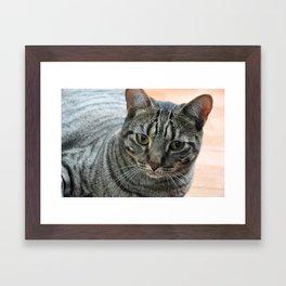 Zebra Jones Framed Art Print