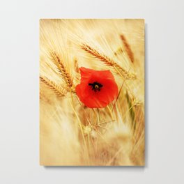 Poppies in the cornfield Metal Print