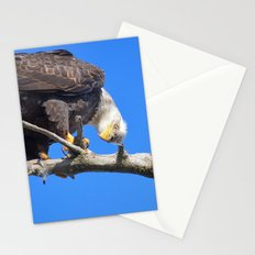 Alaskan Bald Eagle - Quizzical Stationery Cards