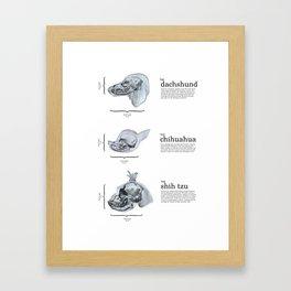 Dog Skull Comparison Framed Art Print