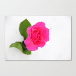 Pink Rose in the Snow Canvas Print