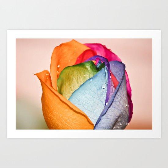 The Rainbow Rose Art Print