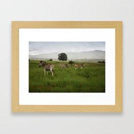 Swaziland Three Zebras Framed Art Print