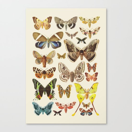 Collection Canvas Print