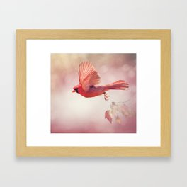 Male Northern Cardinal Flying  ,watercolor painting Framed Art Print