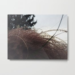 Wheatful Metal Print