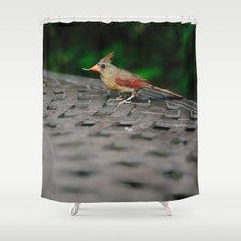 Female Cardinal // Ohio Shower Curtain
