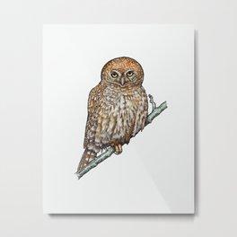 PEARL-SPOTTED OWL Metal Print