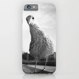 Inquisitive seagull iPhone Case