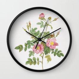 Vintage Pink Rosebush Bloom Illustration Wall Clock