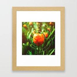 Tulip Imposter Framed Art Print