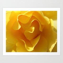 Yellow Rose Ruffles Abstract Art Print