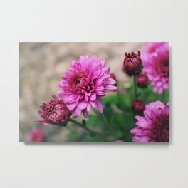 Flower Patch Metal Print