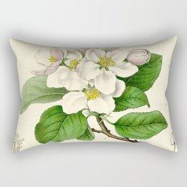 Antique Apple Study Rectangular Pillow