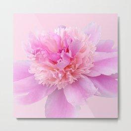 Pink Blush Peony Metal Print