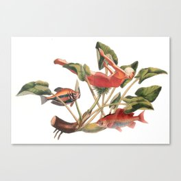 Diver in the Lilies Canvas Print