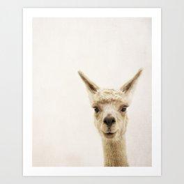 Alpaca Portrait Art Print