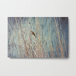 Sedge Warbler At Titchwell Metal Print
