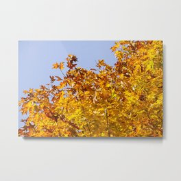 The Maple Chorus in Orange Metal Print