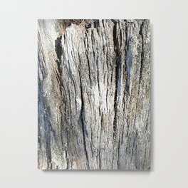 Old Stump Metal Print