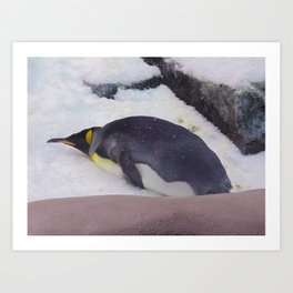 Penguin at Sea World 1 Art Print