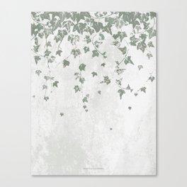 Gray Green Trailing Ivy Leaf Print Canvas Print