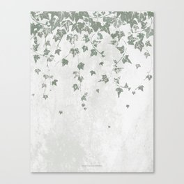 Gray Green Trailing Ivy Leaf Print Canvas Print