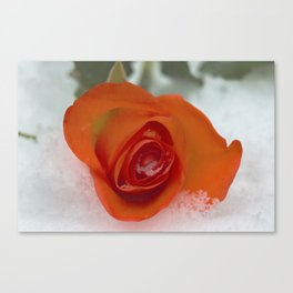 Rose in the snow Canvas Print