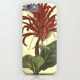Flower 1014 justicia lucida Shining leaved Justicia10 iPhone Case