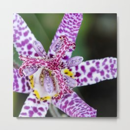 Toad Lily Center Perspective Metal Print