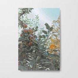 Apple Fields II Metal Print