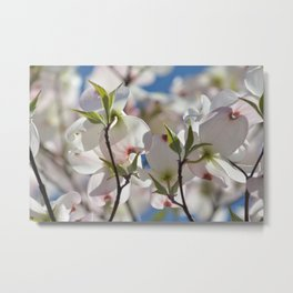 White Dogwood Tree Floral Metal Print