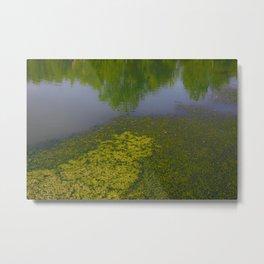 Ecosystem IV Metal Print