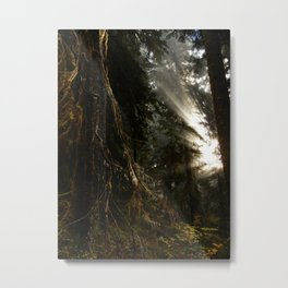 Light Through the Old Growth Metal Print