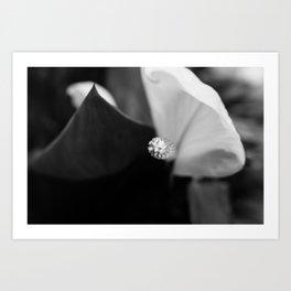Black and White Calla-lily Art Print