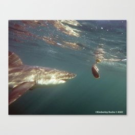Great White Snack Canvas Print