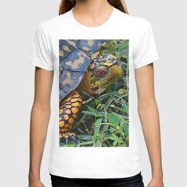 turtle, yellow and orange T-shirt