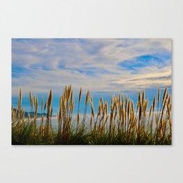 Fort Bragg's Ocean Cattails Canvas Print