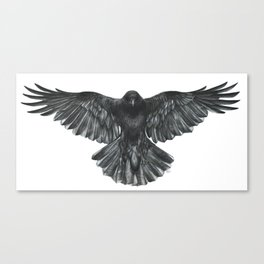 Crow in Flight Canvas Print