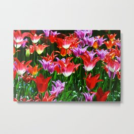 Beautiful triumph tulips of different colors with green leaves Metal Print