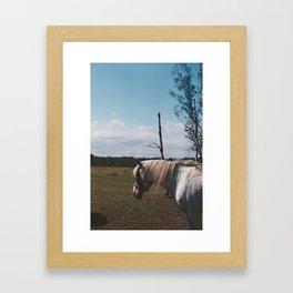 Horse in fly storm Framed Art Print