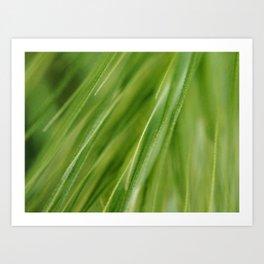 Green Grass Macro Art Print