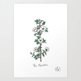 Rosa Pimpinellifolia Art Print